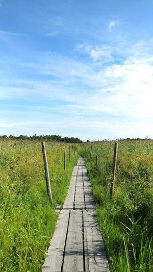 Boardwalk on grassy field against sky