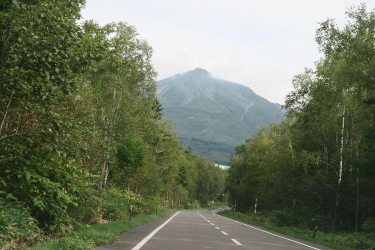 biei hokkaido japan Agriculture Bier Growth Hokkaido Road Sign Tree Cloud And Sky Leaf Mountain Roadside Woods