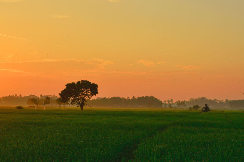 beautiful sunrise in the fields Sky Sunset Plant Field Scenics - Nature Land Beauty In Nature Landscape Environment Tranquil Scene Tranquility Grass Tree Orange Color Nature Growth Idyllic Non-urban Scene Green Color Rural Scene Outdoors