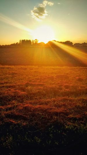 Astonishing Last Rays Of Light at Sunset bathe Golden Fields in a Rural Landscape with Fields and a Gold Sky