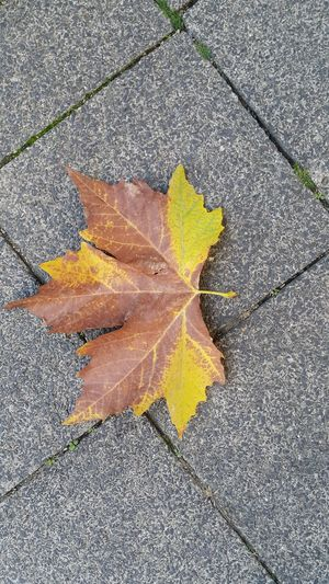 Autumn Leaf Change Dry Fragility Nature High Angle View Outdoors Close-up No People Street Beauty In Nature October City Life Fall Beauty Fall Leaves Fallen Leaf Autumn Colors Autumn Leaves Autumn