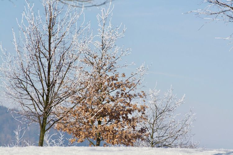 Landscape_Collection Bare Tree Beauty In Nature Branch Cold Temperature Day Environment Land Landscape Landscape_photography Landscapes Nature No People Non-urban Scene Outdoors Plant Scenics - Nature Sky Snow Tranquil Scene Tranquility Tree Winter