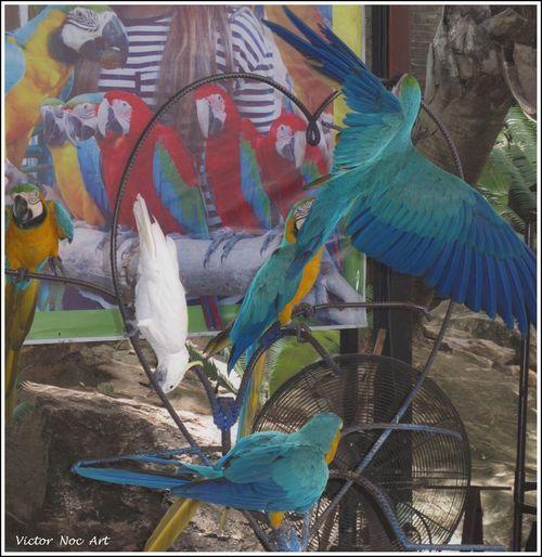 Thailandia 2016 Nong Nooch Tropical Bothanical Garden Pattaya City VictorNocArt VicNocArt Vittorio Nocente Victor Noc Art VicNoc VittNoc Park Photoart Art Scatti  Artfoto 8 88 888 8888 😚 Otto OttoOtto