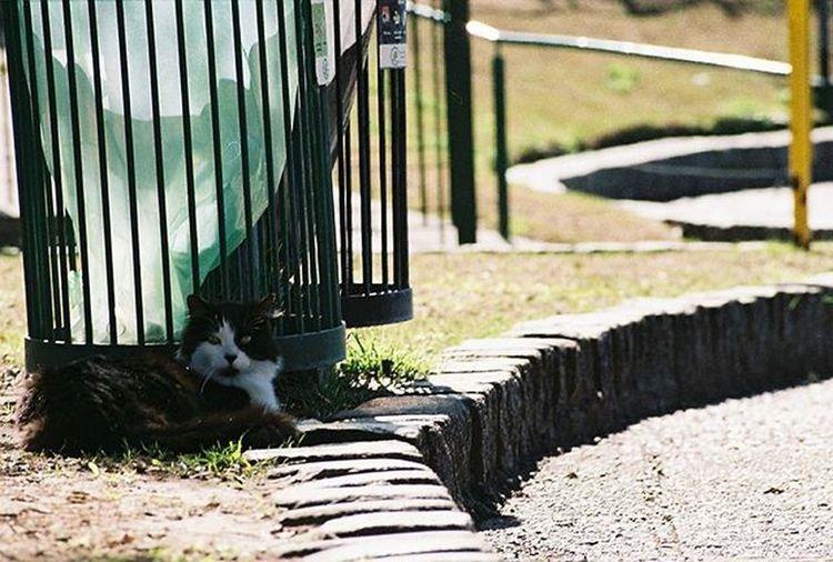 Nikonf301 Fotografiaanalogica Analoguephotography Colorphotography Fotografiacolor Cats Gatos