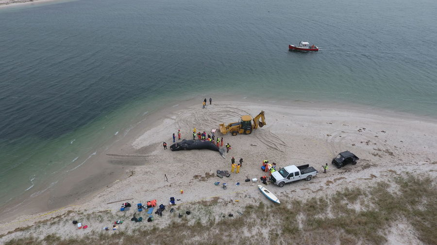 High angle view of people standing by whale and earth mover on beach