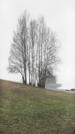 Tree Nature Bare Tree Landscape Grass Beauty In Nature Fog No People Outdoors Branch Foggy Day Foggy Mobilephotography Galaxys6