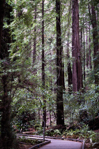 Beauty In Nature Day Find Your Park Forest Growth Lush - Description Muir Woods National Park USA Nature No People Outdoors Scenics Tree WoodLand