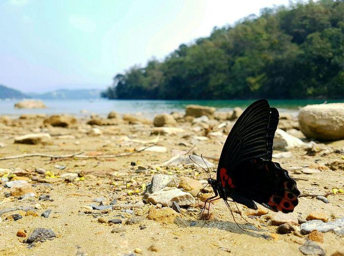 """今天的""""麻豆""""就是牠啦! Baterfly Nature EyeEm Best Shots Keep Going  The View And The Spirit Of Taiwan 台灣景 台灣情 Just Smile & Keep Going.  Beach Traveling SonyNEX5n Lake Sunmoonlake"""