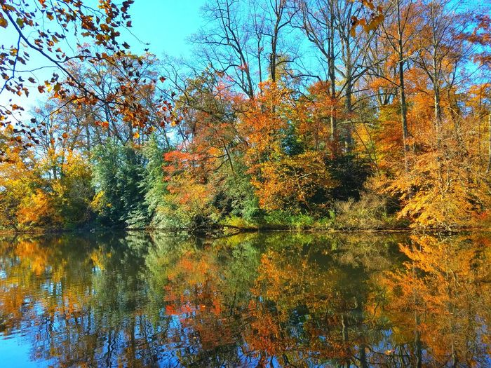 Fall foliage. Autumn colors Nature_collection Nature Photography Naturelovers Outdoorphotography Tranquility Eyemphotography Check This Out Sunny Day Colors Blue Sky Reflections In The Water Beautiful Nature Trees
