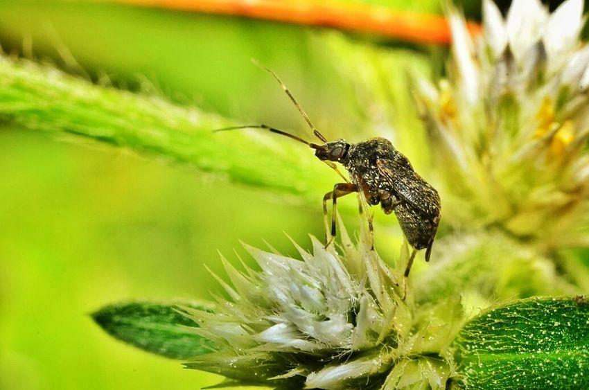Macro Insects Macroclique Streamzoofamily Eyeem Philippines