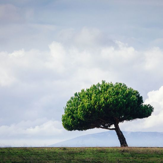 Lone Tree Minimalism Solitude Alone
