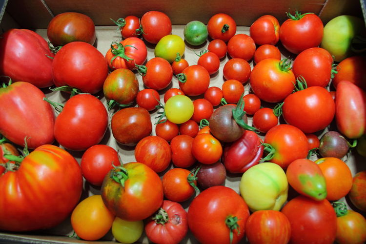 Abundance Backgrounds Close-up Food Food And Drink For Sale Freshness Fruit Full Frame Healthy Eating Indoors  Large Group Of Objects Market No People Red Retail  Ripe Still Life Tomaten Tomato Vegetable Wellbeing