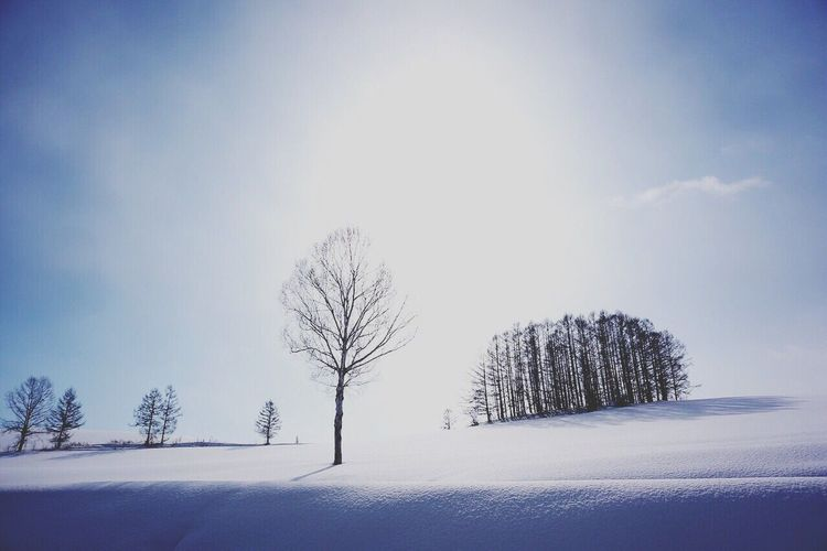 Biei HOKKIDO Japan Snow Winter Beauty In Nature