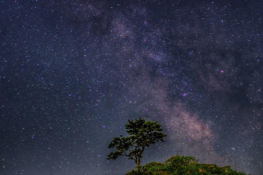 Stellar Star - Space Galaxy Astronomy Milky Way Night Space Low Angle View Tree Sky No People Beauty In Nature Nature Outdoors