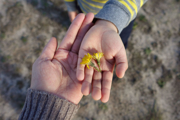 Yellow flowers at hand of a kid Human Hand Human Body Part Hand Holding Close-up Nature Focus On Foreground One Person Day Plant Body Part Outdoors Childhood Autumn Leisure Activity Yellow Offspring High Angle View Flower Finger Mon And Child Family Nature Caring & Loving One Another 50 Ways Of Seeing: Gratitude Human Connection A New Perspective On Life #NotYourCliche Love Letter 17.62°