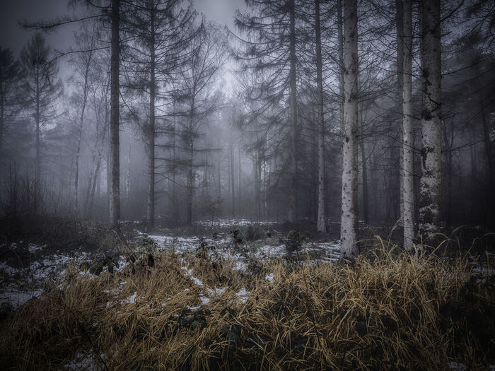 Tree Land Plant Forest No People Nature Tranquility WoodLand Tranquil Scene Fog Environment Day Non-urban Scene Outdoors Trunk Tree Trunk Landscape Beauty In Nature Architecture Buiräbähnlisafari NRW