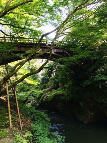 山中温泉 Bridge