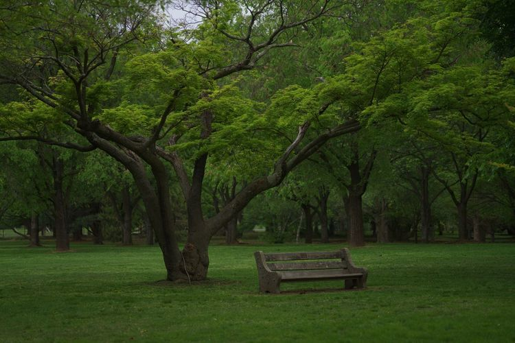 Park Bench Plant Tree Bench Seat Grass Park Green Color First Eyeem Photo