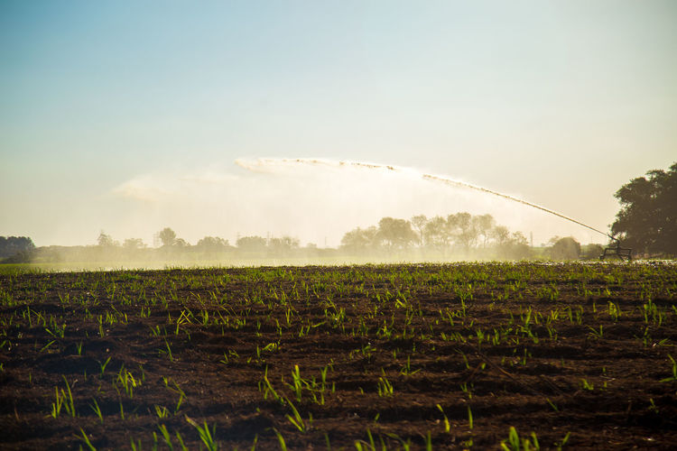 Agriculture Beauty In Nature Crop  Day Environment Farm Field Growth Irrigation Land Landscape Nature No People Outdoors Plant Plantation Rural Scene Scenics - Nature Sky Sugar Cane Field Tranquil Scene Tranquility Tree Winemaking