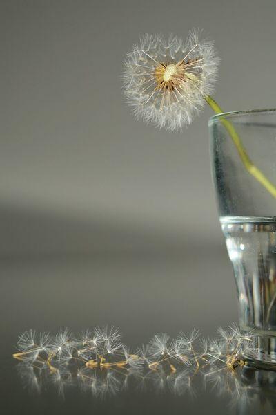 Flowers Conceptual Nikon D7100 AF-S NIKKOR 50mm F /1.8G SE Nikon Minimalism