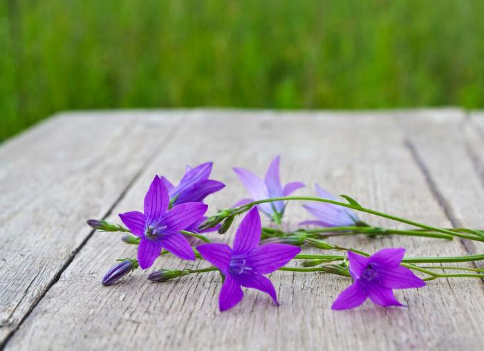 Close-up of purple crocus flowers on wood