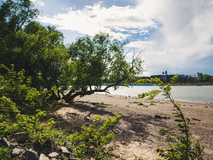 At the Rhine.