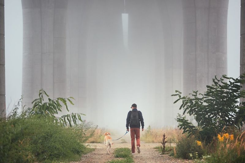Man with dog under highway bridge in mysterious morning fog. Autumn Hiking Man Weather Architecture Bridge Casual Clothing Column Dog Exploration Fall Fog Gloomy Highway Leaving Leisure Activity Lifestyles Mist Mysterious One Person People Pets Pillars Togetherness Walking Fresh On Market 2017