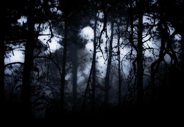 Silhouette of trees in forest