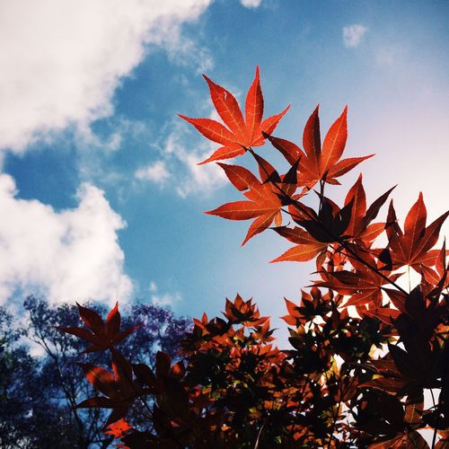 Low Angle View Of Autumn Leaves Against Cloudy Sky