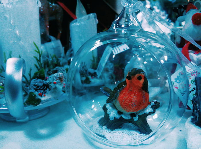 Bullfinch Gift Candles New Year Christmas Decoration Decoration Red Cold Temperature Winter Market Magazine Indoors  Blue No People Animal Themes Close-up Aquarium Day Bird EyeEmNewHere