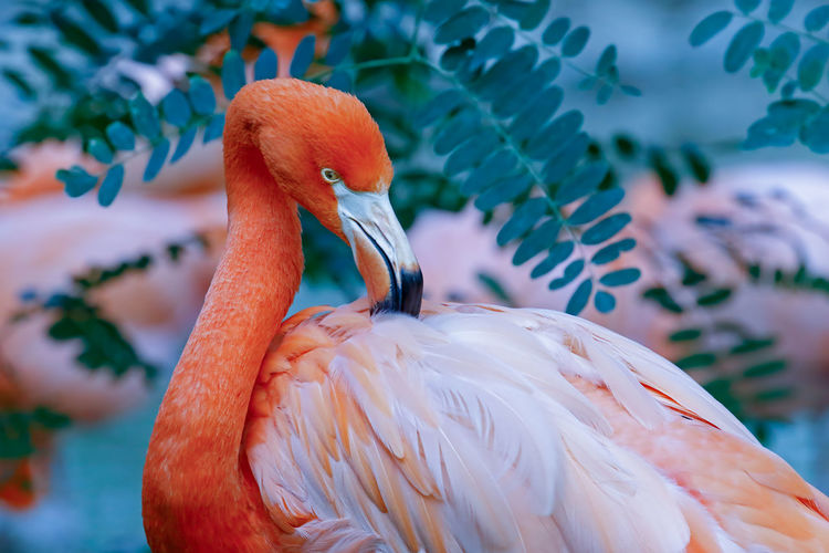 Animal Themes Animal Wildlife Animals In The Wild Beak Beauty In Nature Bird Close-up Day Flamingo Focus On Foreground Multi Colored Nature No People One Animal Outdoors Pelican Water