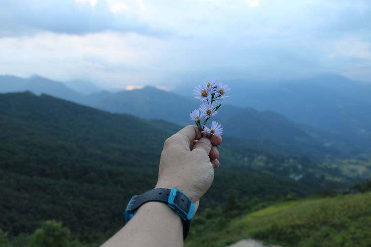 Cropped hand of person holding flowers against mountain