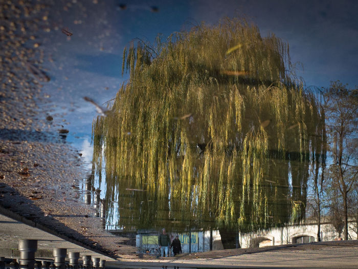 Why a good haircut is important Puddleography Reflection Tree Flip Park Reflection_collection Urban Landscape Water