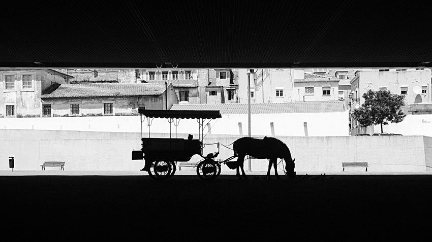 Horse Transportation Mode Of Transport Horsedrawn Built Structure Museum Museu Dos Coches Coches Antiguos, Black And White Blackandwhite Black & White Black&white Black And White Portrait Blackandwhite Photography Black And White Photography Blackandwhitephotography Black And White Collection  Blac&white  EyeEm The Photojournalist - 2017 EyeEm Awards EyeEm Best Shots EyeEm Nature Lover Eye4photography  EyeEm Gallery EyeEm Diversity The Week On EyeEm