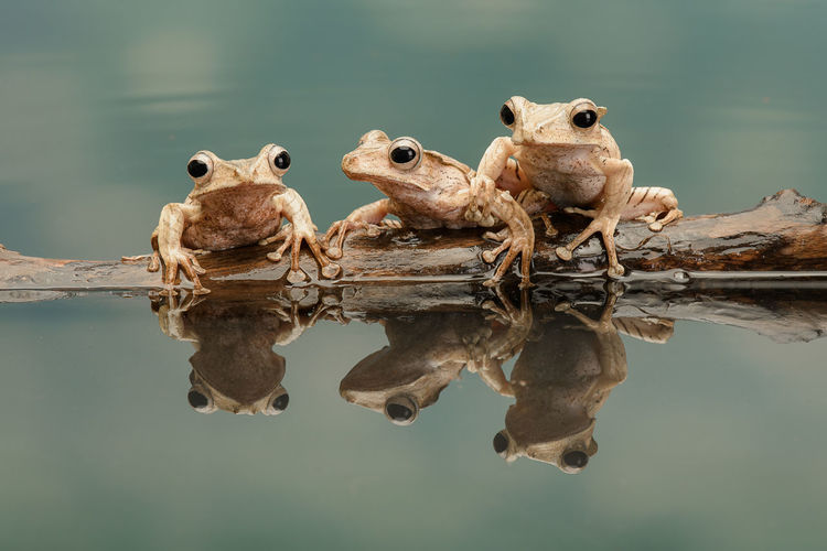 Move over Frogs
