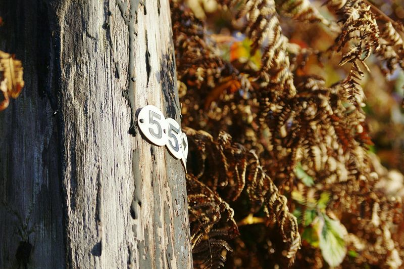 Close-up of numbers on wooden post by tree