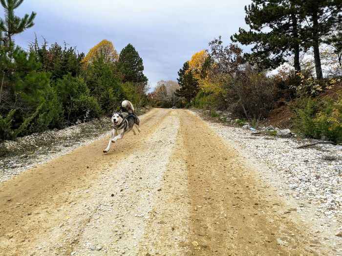 Dog walking on road by trees