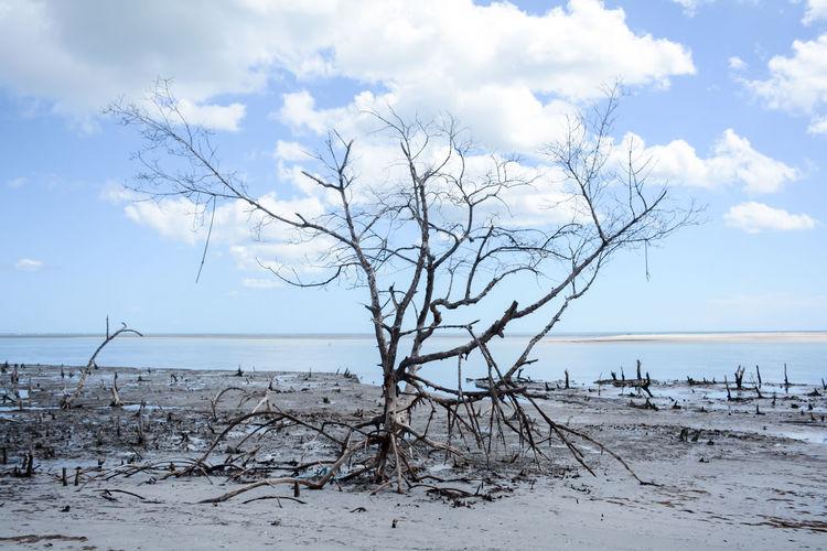 Dead Tree At Beach Against Sky