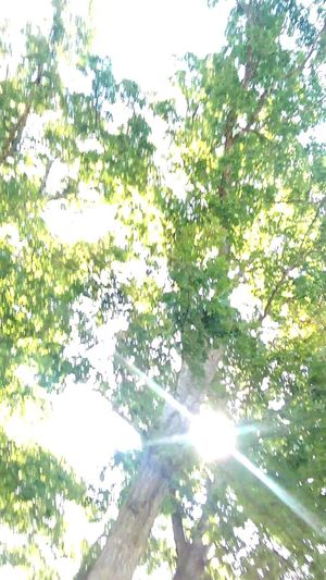The Purist Sunbeam Treetasticthursday Creative Light And Shadow Color Photography Eye Am Nature