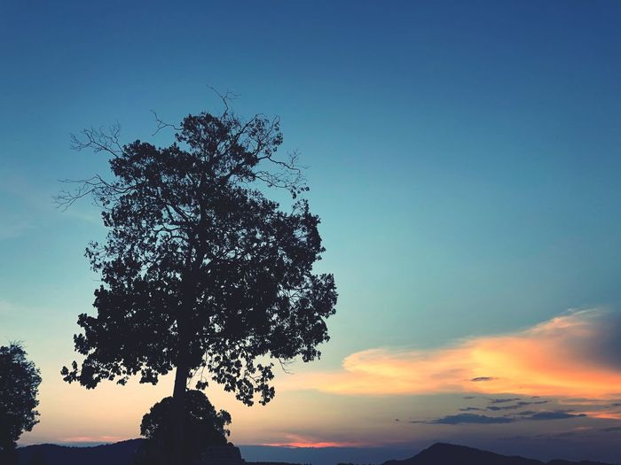 The tree silhouette on sunset twilight sky scenery Sky Tree Plant Beauty In Nature Nature Tranquility Silhouette Sunset Tranquil Scene No People Low Angle View Outdoors Growth Copy Space Scenics - Nature Idyllic Landscape Blue Cloud - Sky Single Tree