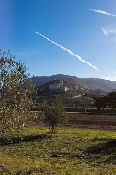 Autumn Basilica Olive Tree Saint Francis Of Assisi Architecture Beauty In Nature Building Exterior Built Structure Contrail Day Grass History Italy Landscape Medieval Nature No People Outdoors Scenics Sky Tranquil Scene Tranquility Tree Umbria Vapor Trail