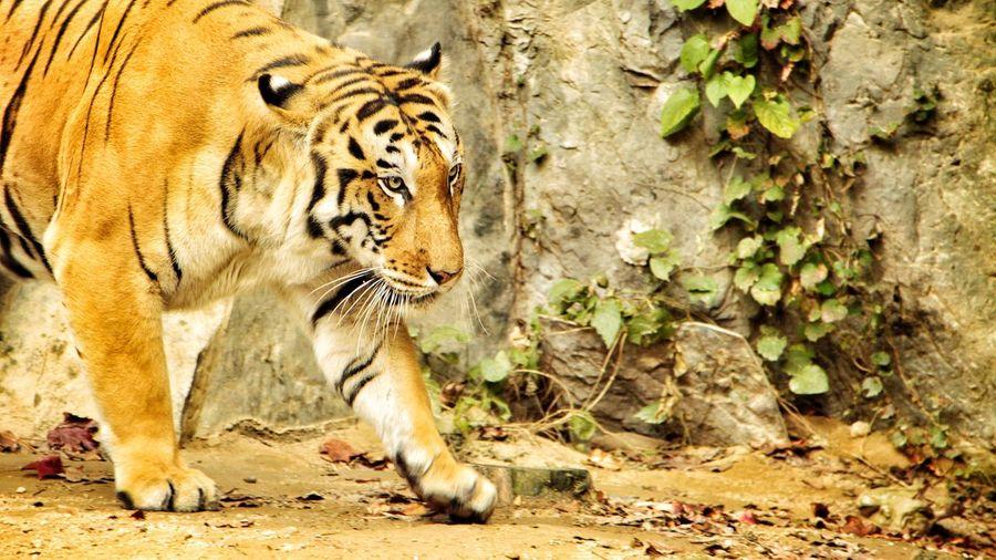 Zoo Zoology Zoo