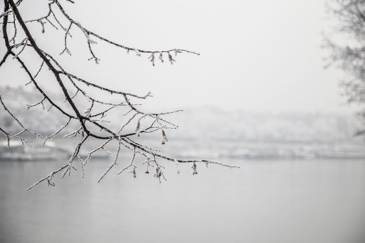 Close-up of bare tree by lake against sky