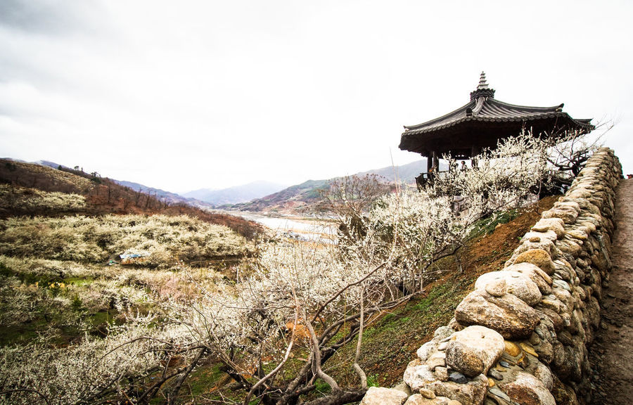 Ttangkkeut Maehwa Festival; south korea; Chosong-ri; Sani-myeon; Haenam-gun; Jeollanam-do; March; 2018 2018 Chosong-ri; Sani-myeon Haenam-gun; Jeollanam-do Nature Peace Plum Blossom Rock South Korea Tree Ttangkkeut Maehwa Festival Winter Fall Fence House Landscape Mountain Range Springtime