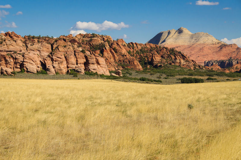 Yellow field and red rocks in Zion national park, Utah Utah Zion Arid Climate Beauty In Nature Day Grass Landscape Mountain Nature No People Outdoors Physical Geography Rock - Object Scenics Sky Tranquil Scene Tranquility