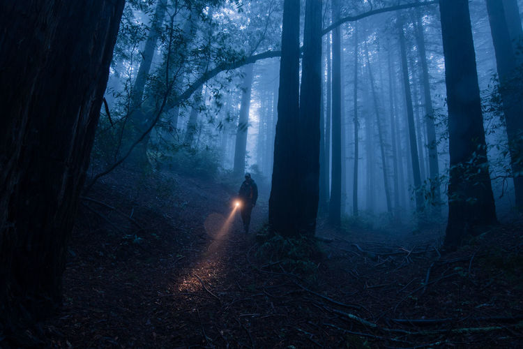 Forest walk Forest Tree Plant WoodLand Tree Trunk One Person Illuminated Outdoors Spooky Mystery Solitude Unrecognizable Person Fog Nature Trunk Tranquility Blue Searching Finding Atmosphere Atmospheric Mood Nature Inspire
