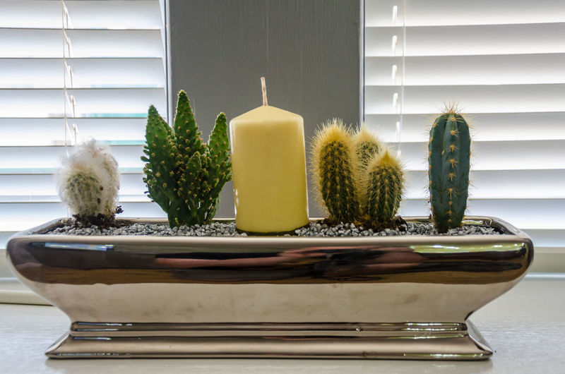 Cacti and a candle. Cacti Spiky Cactus Close-up Container Decoration Decorative Focal Point Growth Home Interior House Plants Indoors  No People Plant Potted Plant Prickly Sharp Still Life Window Window Ledge Window Sill