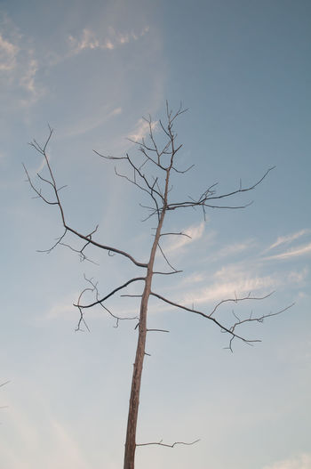 Bare Tree Sky Tree Branch Plant Beauty In Nature Cloud - Sky No People Tranquility Nature Low Angle View Day Scenics - Nature Dead Plant Outdoors Tranquil Scene Trunk Non-urban Scene Tree Trunk Dry Dead Tree Dead Treeporn Dead Tree Trunks Dead Trees Nature