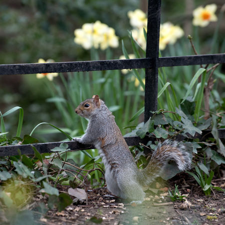 Animal Themes Animal Wildlife Animals In The Wild London Manor House Gardens Nature No People One Animal Outdoors Park Spring Springtime Squirrel Squirrel
