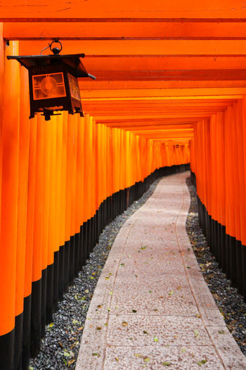 Red Gates Business Inari Shrine Japan Shinto Shrine TORII Architectural Column Architecture Belief Building Built Structure Diminishing Perspective Direction Footpath In A Row No People Orange Color Outdoors Place Of Worship Religion Shinto Shrine Spirituality The Way Forward Torii Gates Tunnel